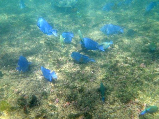 Baia do Sueste : Peixes