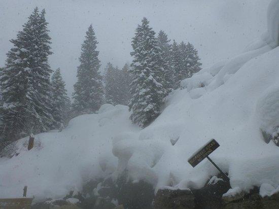 Jackson Hole Snowmobile Tours: Hot Spring