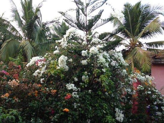 Bougainvillea Guest House Goa: Bougainvillea Garden