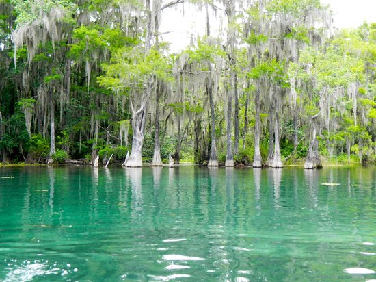 Rainbow River Canoe and Kayak: Rainbow River has clear water with cypress trees along the banks.
