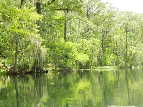 Rainbow River Canoe and Kayak: The Withlacoochee