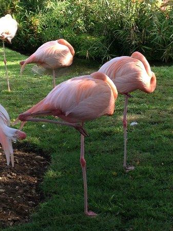Dreams La Romana Resort & Spa : Flamingos napping