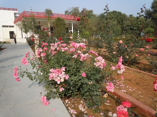 Tiger Den Resort: Beautiful roses in bloom