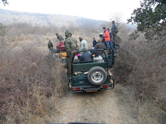 Ranthambore National Park: Jeep safari