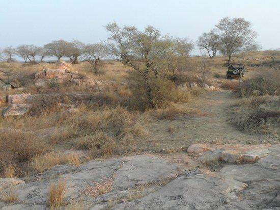 Ranthambore National Park: Dry landscape