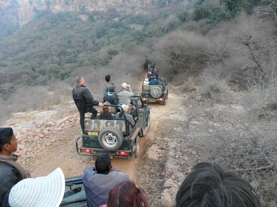Ranthambore National Park: The waiting game
