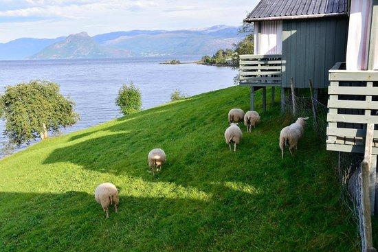 Oddland Camping: Achterzijde bungalows