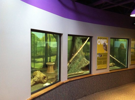 Boonshoft Museum of Discovery: Animals