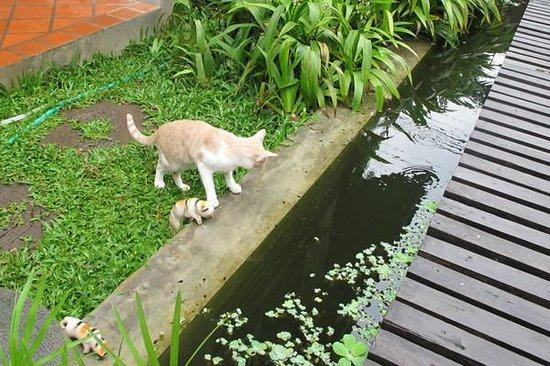 Chiang Mai Summer Resort : 小猫咪