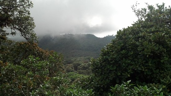Reserva Bosque Nuboso Santa Elena: View of cloud forest from tower