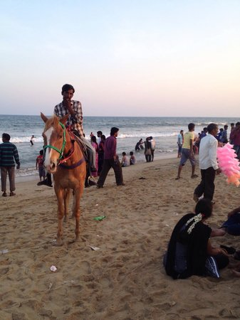 Marina Beach: horse back riding 80 rupees