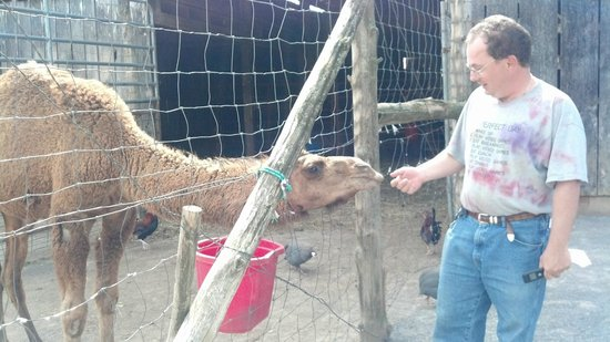 Circle G Ranch: Wild Animal Park & Camel Safari: Friendly Camels