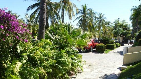 Velas Vallarta Suite Resort : Lush, well-manicured landscaping