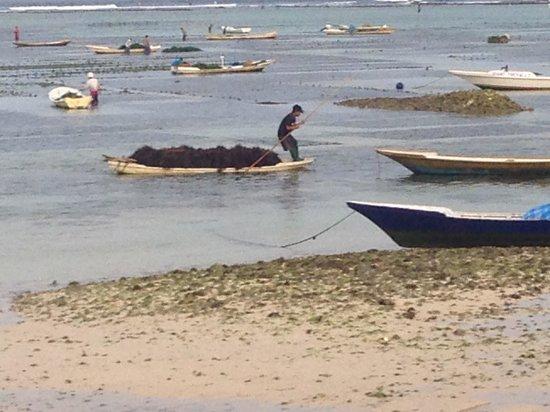 Yogi Beach Bungalows: seaweed farmers