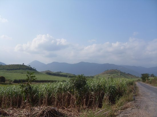 Scimitar Easyrider Tours: Sugar plantations