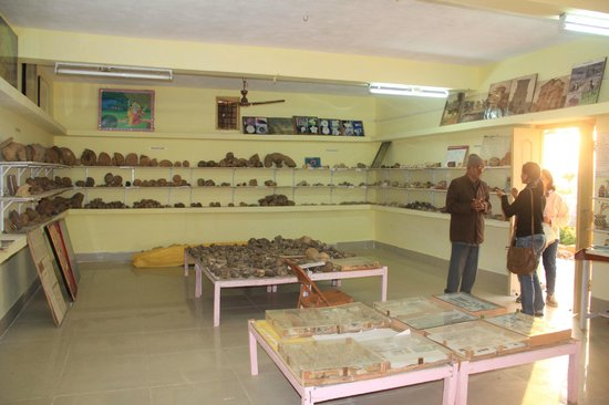 Bhuj, India: Mr. Sodha explaining about the fossils