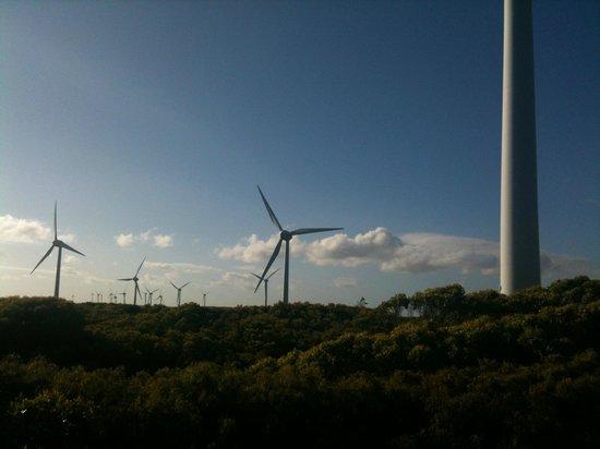 Albany Wind Farm: Lots of turbines