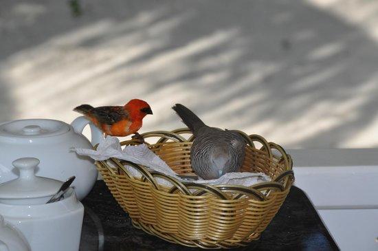 Cap Jean Marie Beach Villas : petit déjeuner partagé!