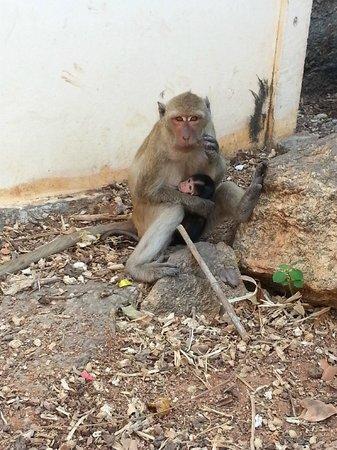 Wat Khao Takiap: Mother and child monkeys at Khao Takiap