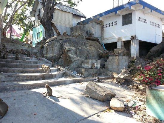 Wat Khao Takiap: Monkeys at Khao Takiap