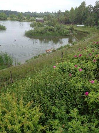 Mulde Fritidsby: Bild från husets framsida nedanför betar kronhjortar
