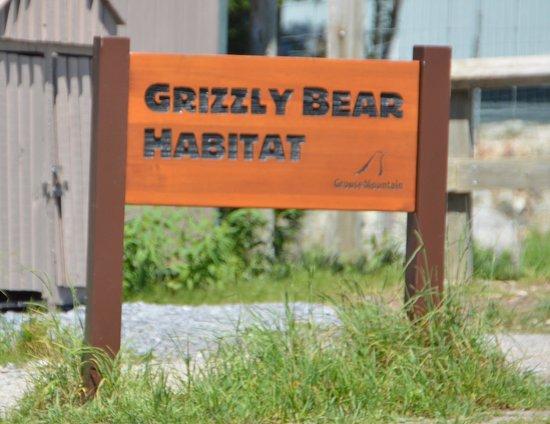 Grouse Mountain: Grizzly Bears ahead.