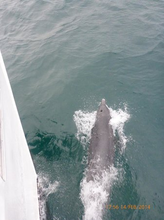 Jervis Bay Wild Cruises: Dolphin bow riding