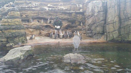 Woodland Park Zoo: Feeding Penguins