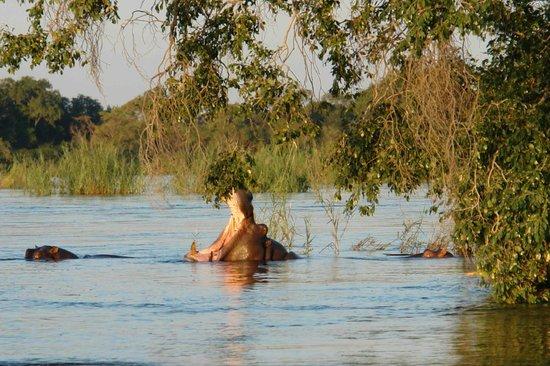 Mama Out of Africa: gita sul fiume Zambesi