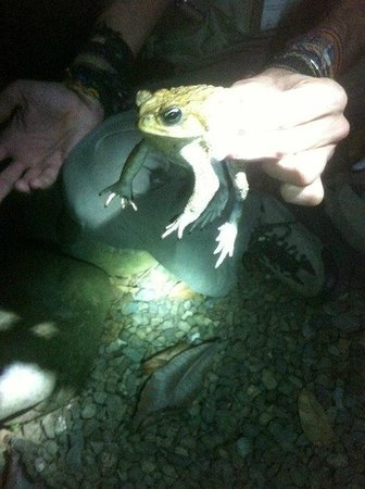 Greentique Costa Rica Tours: frog or toad