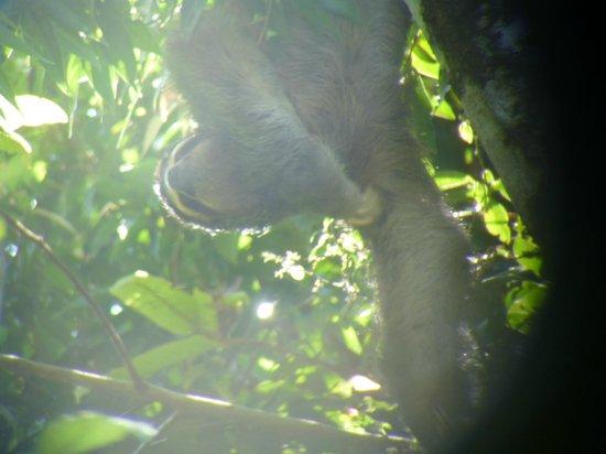 Greentique Costa Rica Tours: sloth