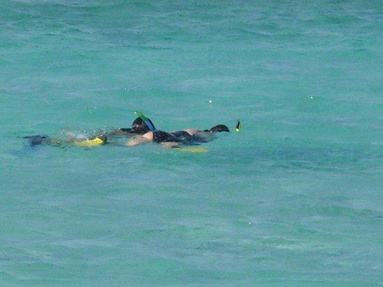Euro Divers Sheraton Maldives: Snorkeling was also fun