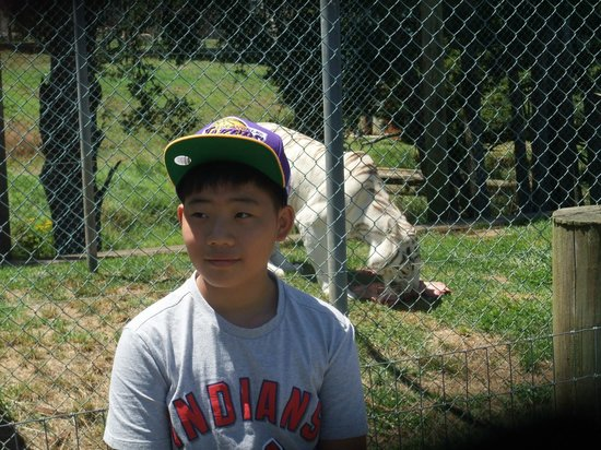 Kamo Wildlife Sanctuary: My son with white tiger.
