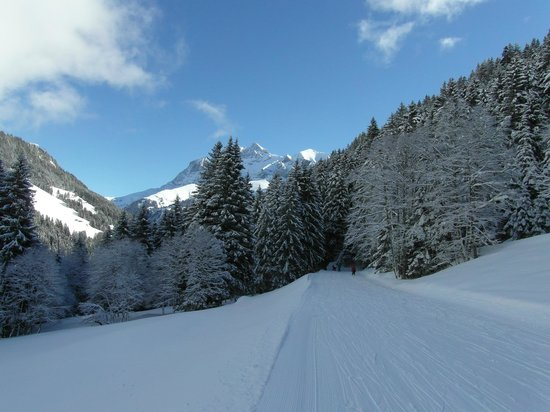 Chalet Hotel Bel 'Alpe: Ski-ing into treelines in Les Crosets