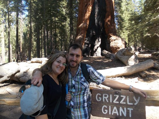 Yosemite Valley: Grizzly Giant