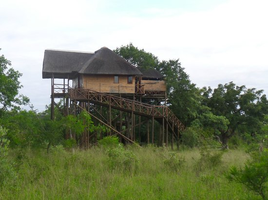 Pezulu Tree House Game Lodge: Baumhaus - alle getrennt