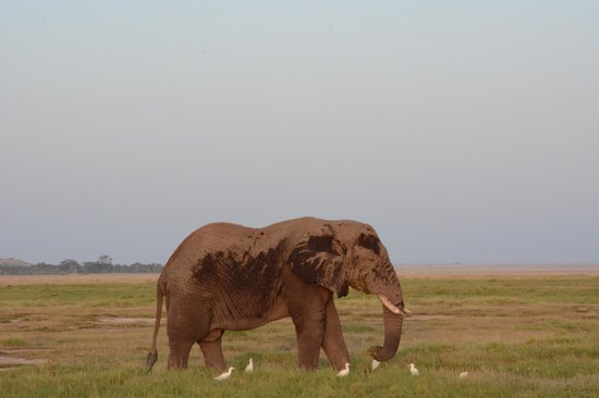 F. King Tours and Safaris - Day Tours: More elephants