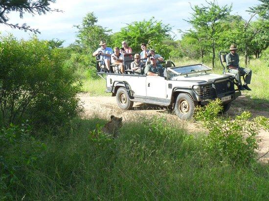 Pezulu Tree House Game Lodge: Landrover - Safaritour