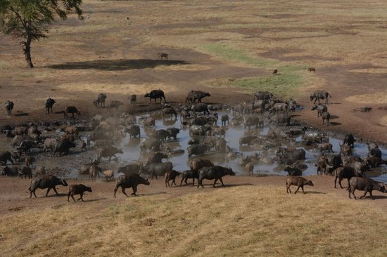 F. King Tours and Safaris - Day Tours: at the waterhole