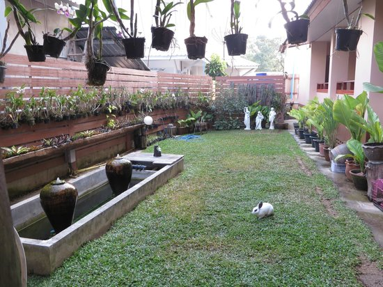 Baan Malai Guesthouse : Small garden area - note the rabbit in the front!