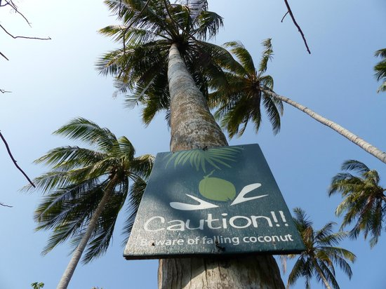 Phi Phi Island Village Beach Resort: Palmen