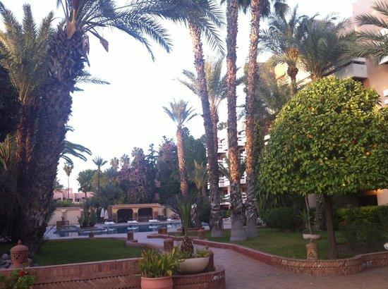 Hotel Amine : Garden