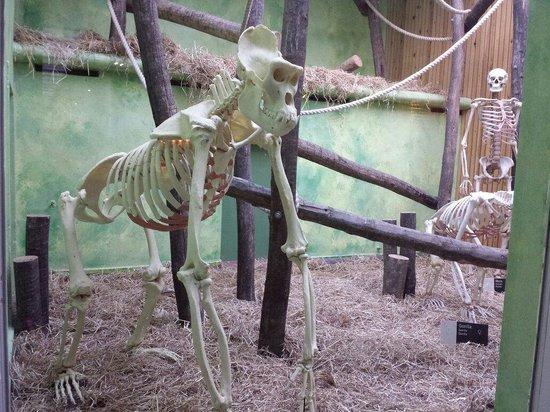 Antwerp Zoo (Dierentuin): Grand singe