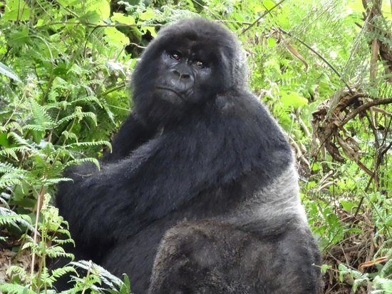 Virunga Lodge: I'm the one you've come to see !