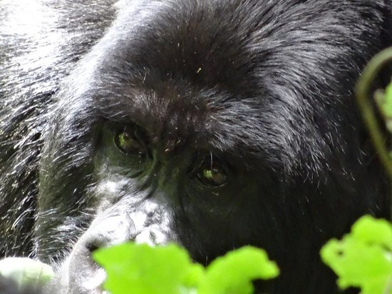 Virunga Lodge: Who you looking at!