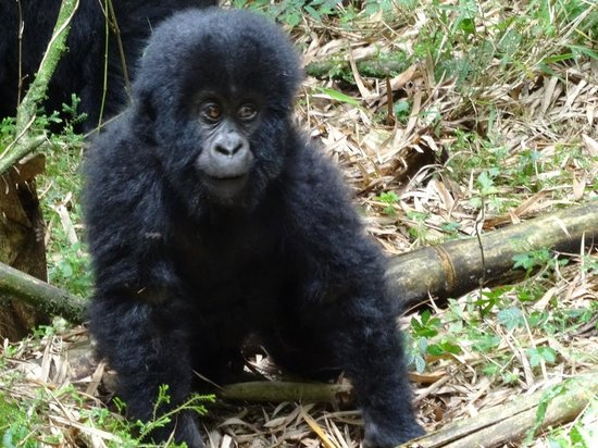 Virunga Lodge: Am I not cute?