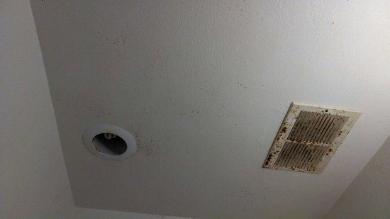 Travelodge Orlando Downtown Centroplex: The bathroom ceiling had mold all over it