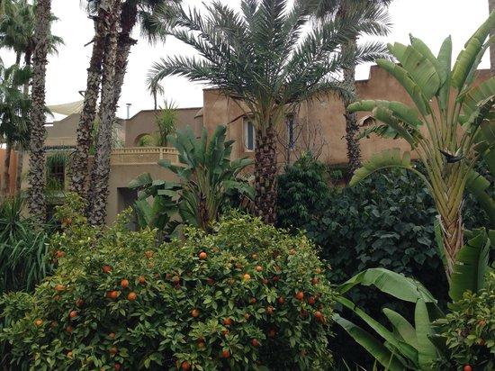 Les Jardins de la Medina : Vista desde la habitación