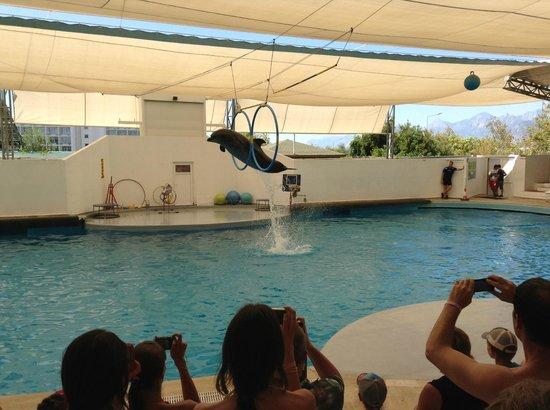 Шоу - Picture of Antalya Aqualand & Dolphinland, Antalya ...