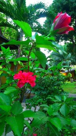 New Leaf Detox Resort: Flora